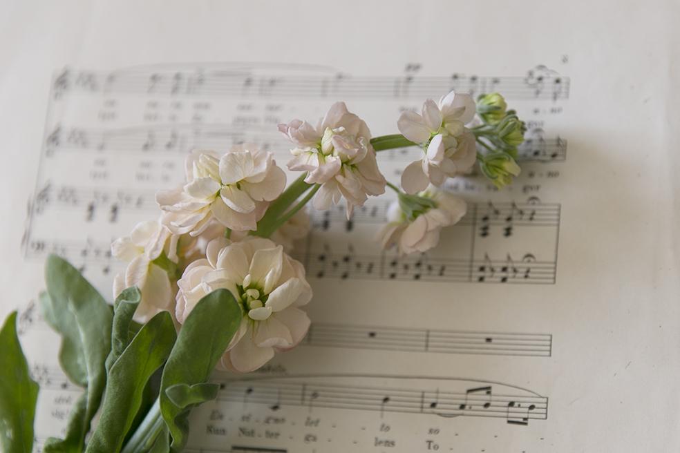 Hymn to hope - yrittäjyys